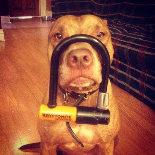 忍耐強い犬15