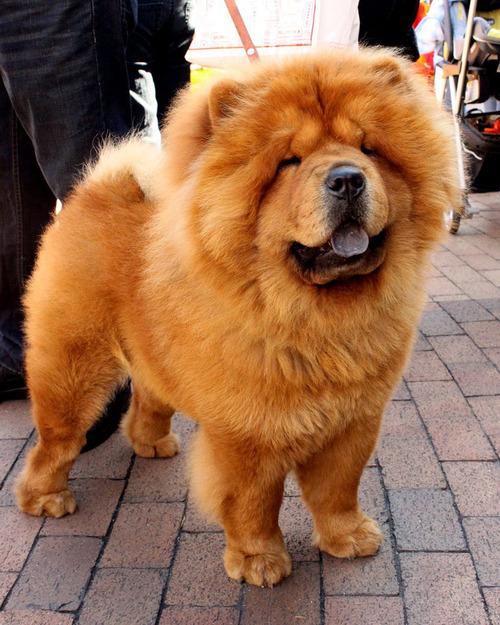最も攻撃的な犬06