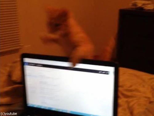 ノートパソコンと子猫03