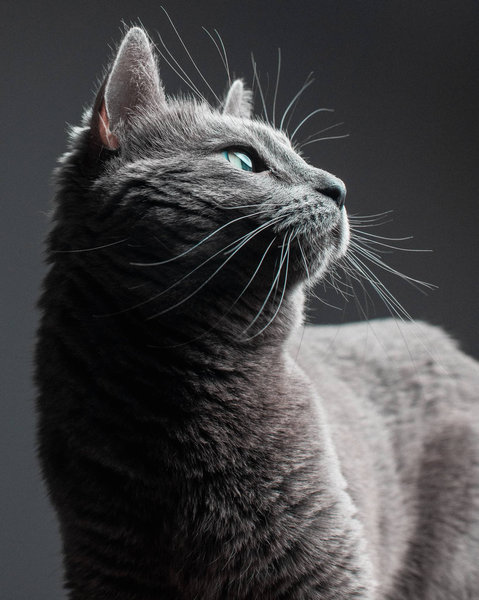 猫シッター01