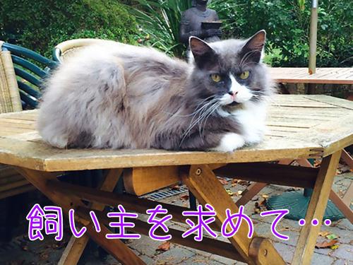 猫が飼い主を求めて施設まで00
