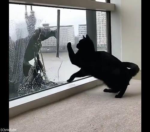 猫と窓掃除人が出会ったら02