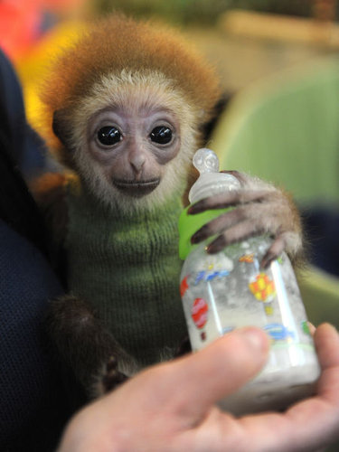 動物の赤ちゃん39