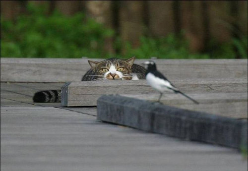 15獲物を狙う視線