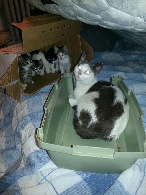 野良猫が子猫08