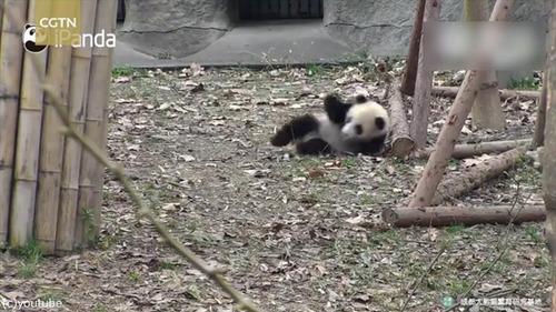 おもちゃを片付けられたパンダはこうなる07