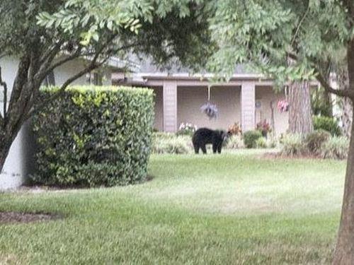 住宅街にクマが侵入03