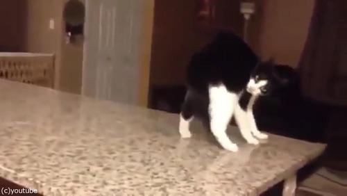 「この猫に…何が起きてるの!」06