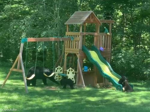庭の遊具でクマの親子たちが楽しそうに遊んでた03