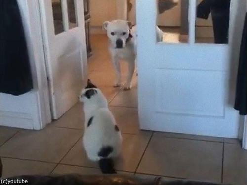猫が怖くて通れない犬00