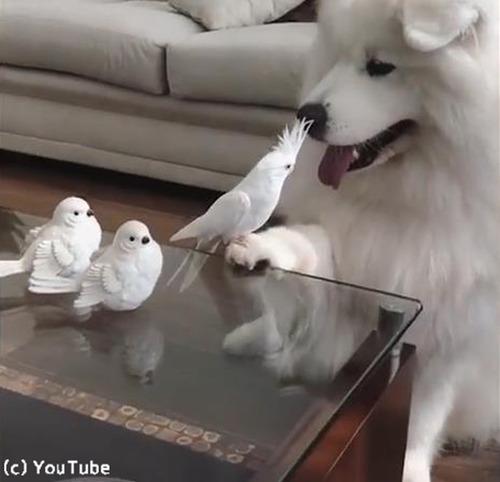 「う、動けない」…鳥に困ってるワンコがかわいい01