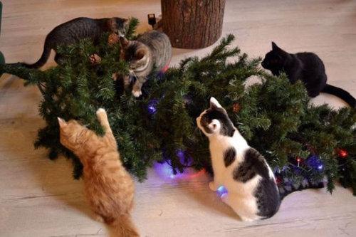クリスマスとペット20