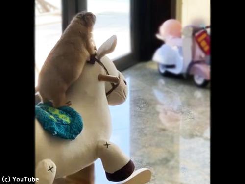 プレーリードッグも木馬が好き00