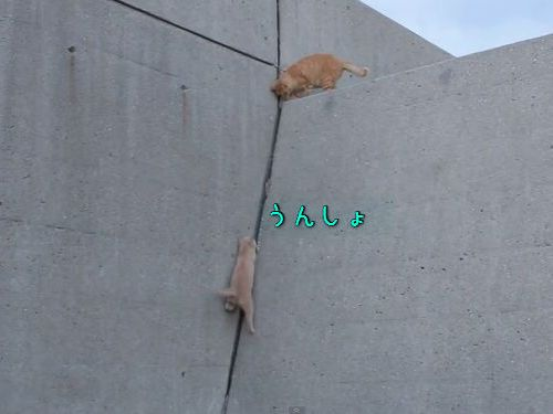 壁を登る子猫、迎える兄00