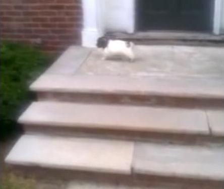 階段が怖い子犬…まさかの方法04