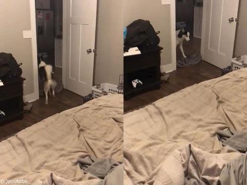 犬の前で消えるマジック02