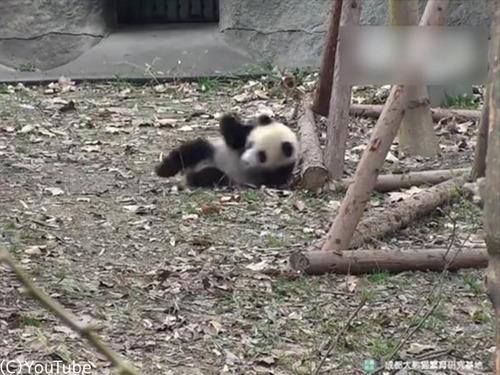 おもちゃを片付けられたパンダはこうなる00
