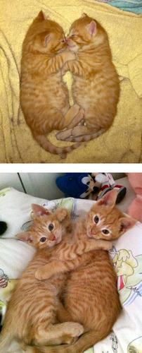 成長した猫11