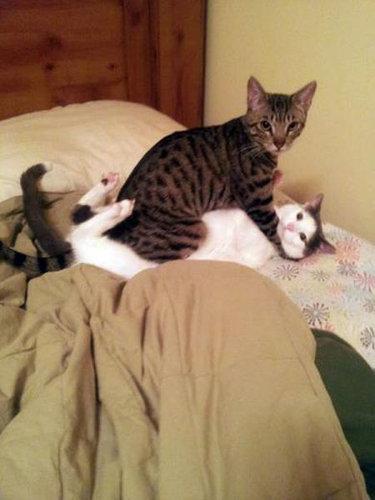 押し倒される猫02