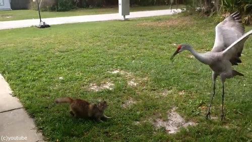 ツルと猫02