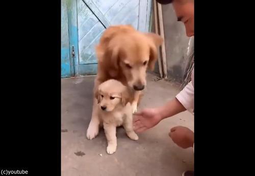 過保護な犬01