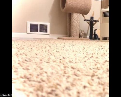 カメラにおそるおそる近づく子猫01