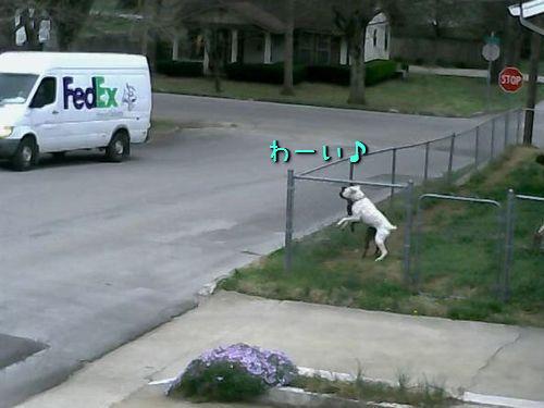 犬「わーい車が戻ってきたー!」00