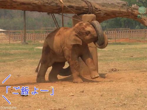 子ゾウ「もっと遊びたい!」母ゾウ「ご飯の時間よ!」00