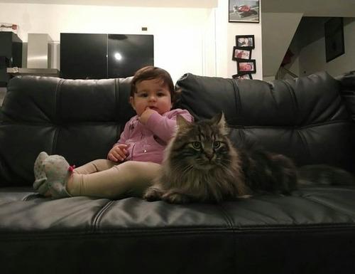 女の子を守る猫11