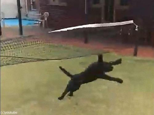 テニスのネットに引っかかった犬の宙返り04