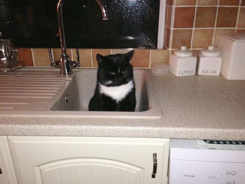 キッチンの猫01