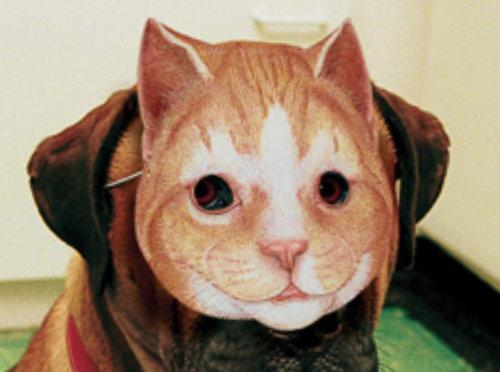 犬に猫マスク26