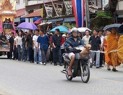 自転車やバイクに乗る犬たち09