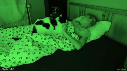 飼い主さんが眠っている間…猫たちはこんな感じ05