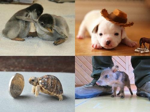 動物の赤ちゃん00