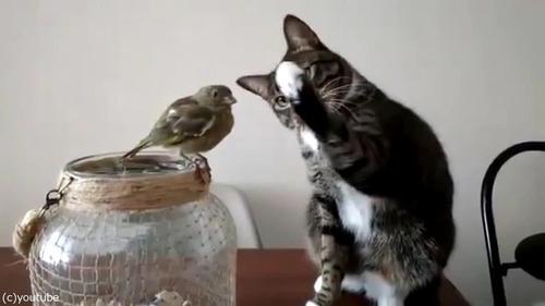 鳥を優しくさわる猫02