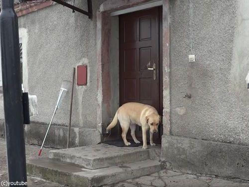 家に入りたい犬03
