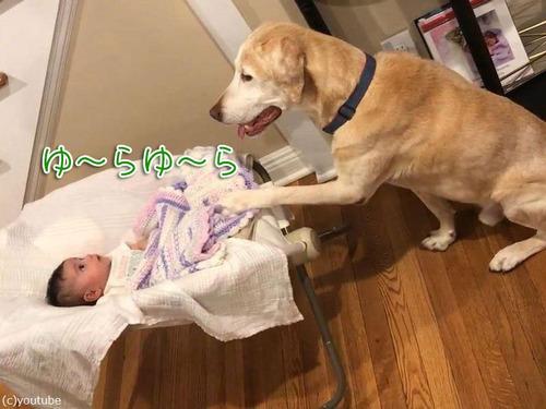 赤ちゃんのゆりかごを揺する犬00