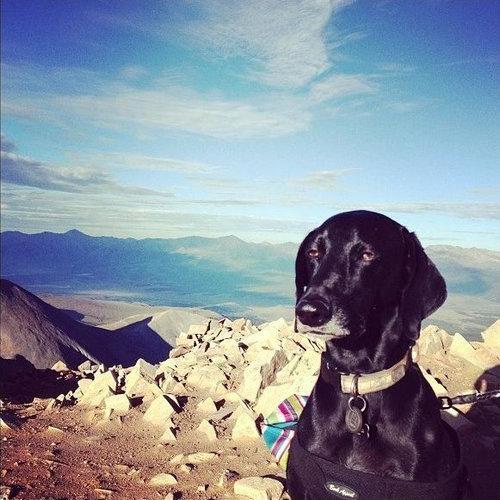 世界で最も感動の薄い犬01