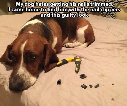 悪さをした犬たち18