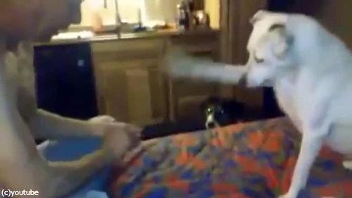 犬、お父さんの手品に驚く01