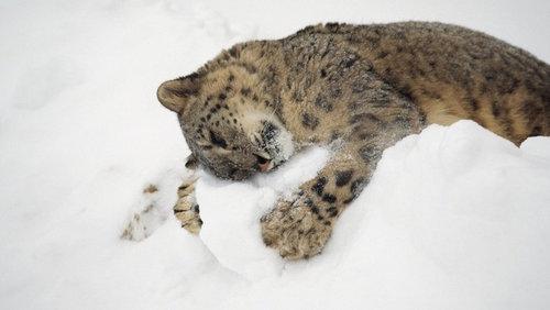雪を喜ぶ動物11