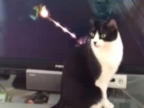 無敵の猫01