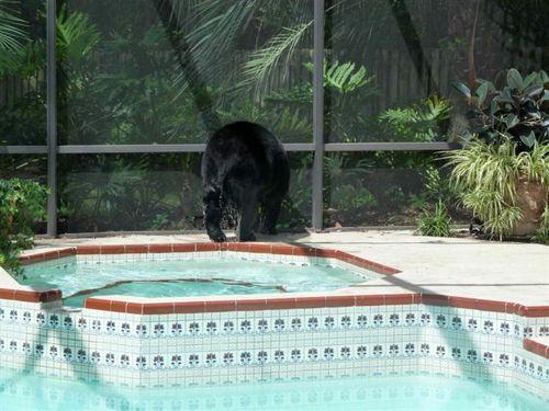 プールに動物19