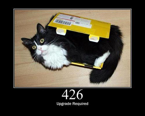 猫でHTTPステータスコード19