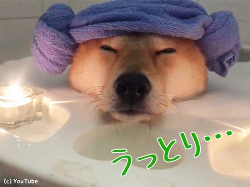 柴犬、泡風呂でリラックス00