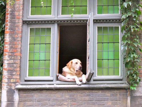 幸せそうな犬08