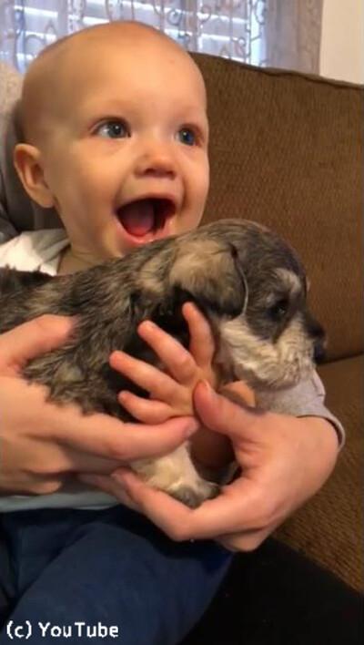 泣いてる赤ゃんに子犬を抱かせたら…こんなに表情が明るくなった!03