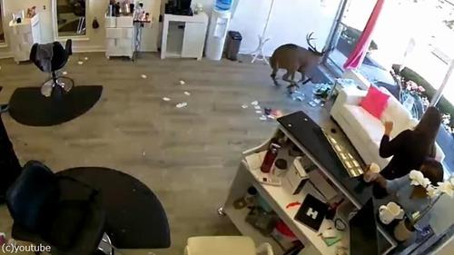 野生の鹿が窓から…美容室のビックリハプニング04