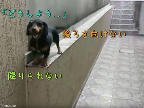 「この犬がどうやって窮地を脱出するかわかる?」00